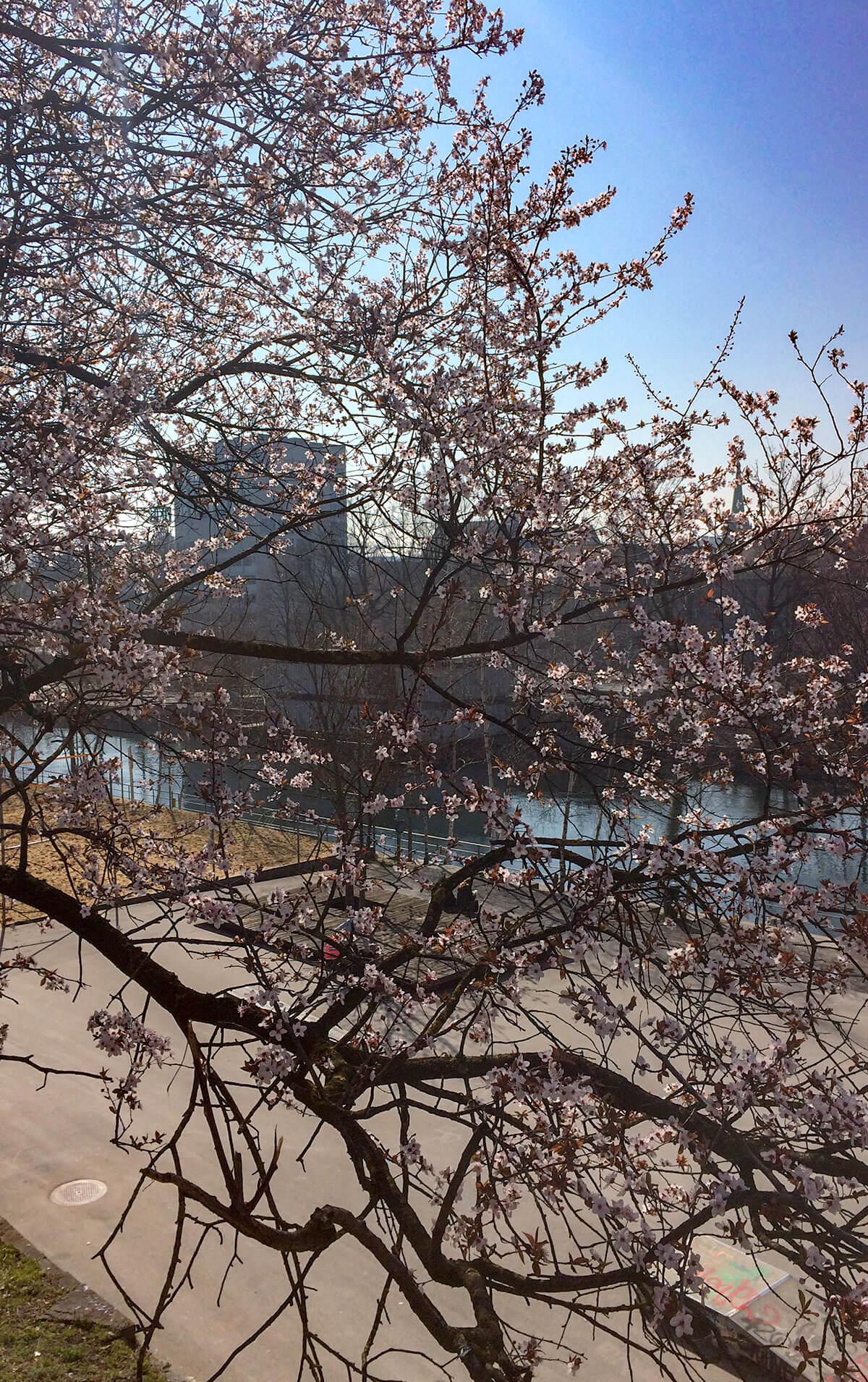 Zürich Frühlingsreise