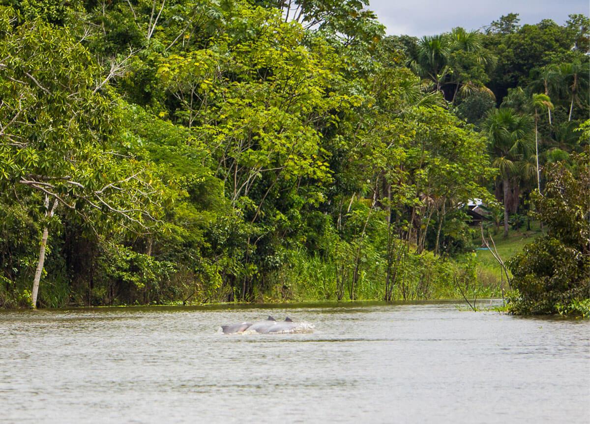 Delfine Peru