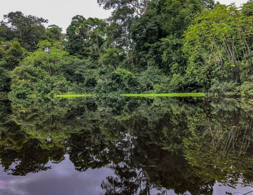 Peru Reisetipp: Regenwald Pacaya Samiria