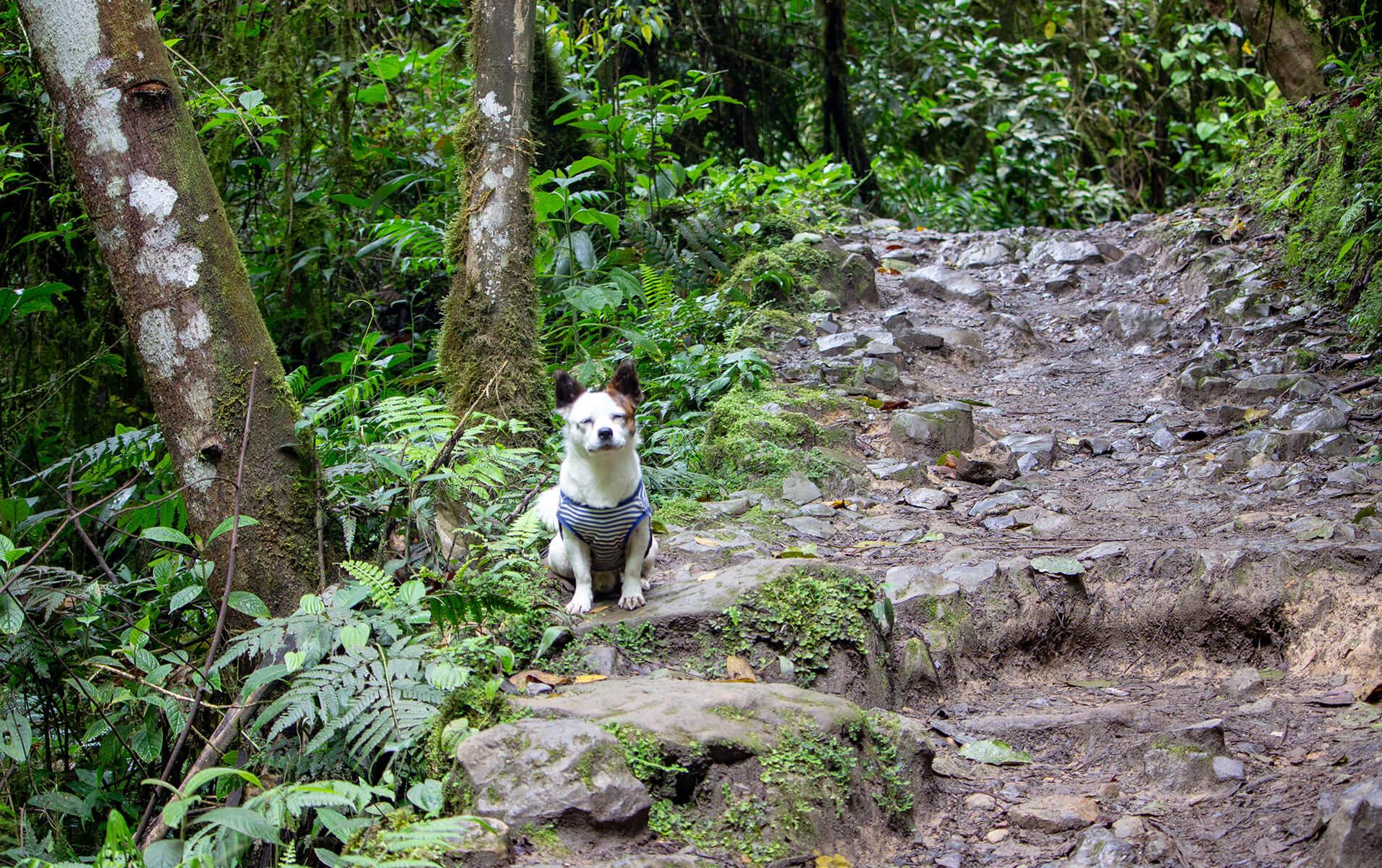 Wandern mit Hund Peru