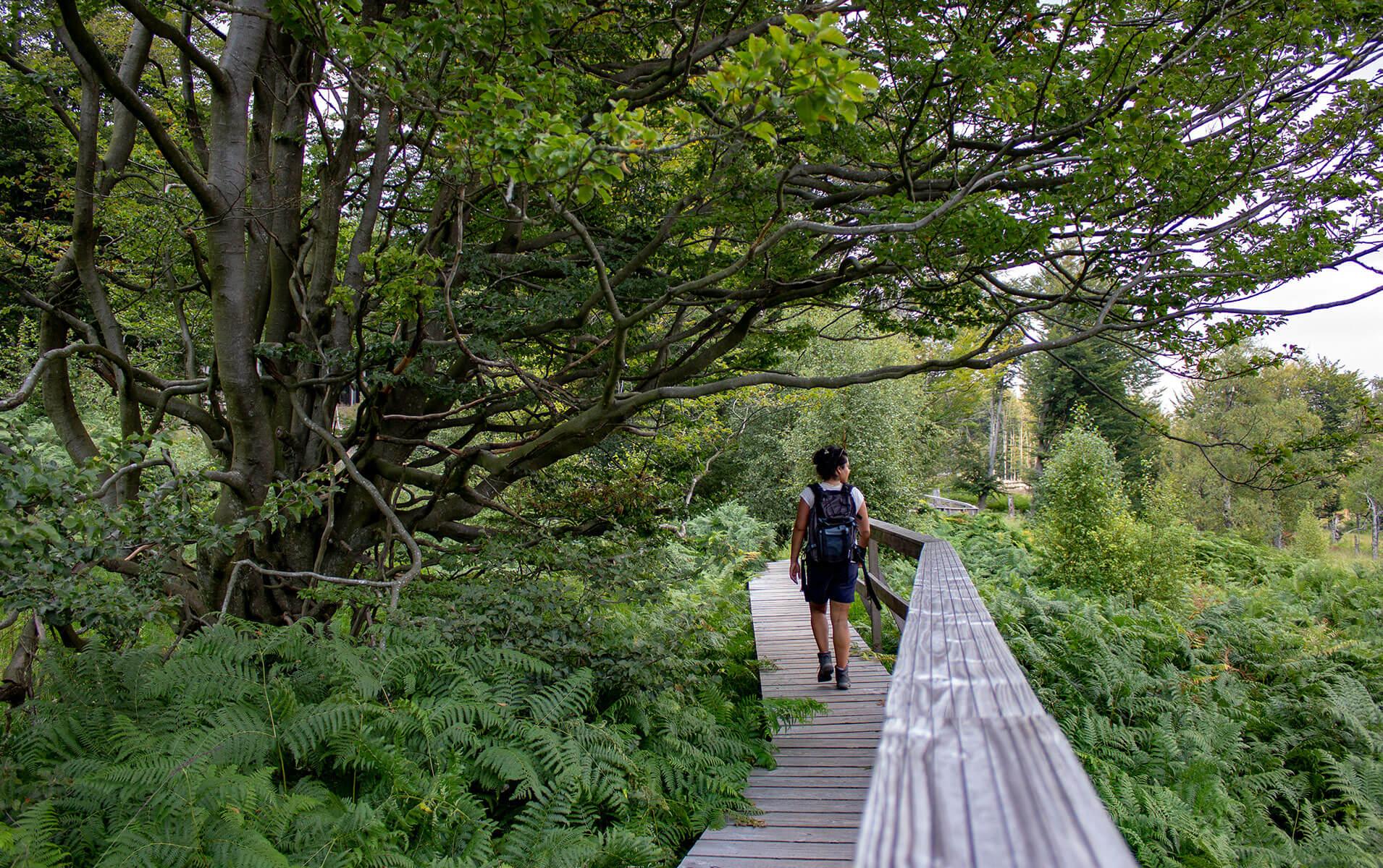 Unterwegs im Nationalpark Hunsrück-Hochwald