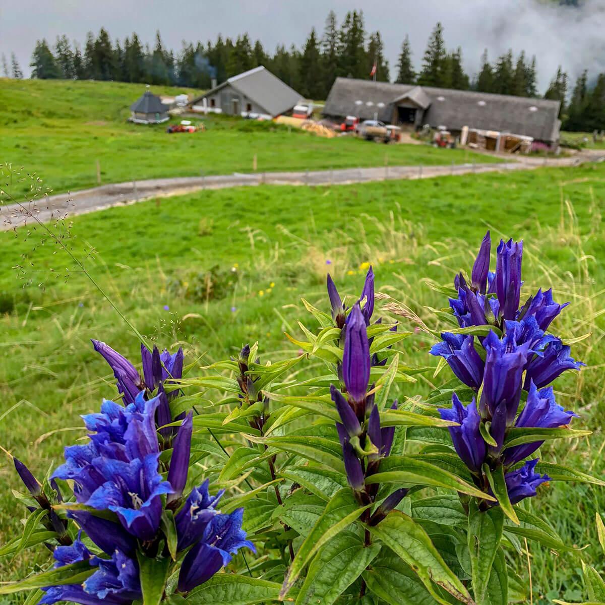 Alp Chäserenholz Rigi